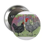 Marans Chickens Button