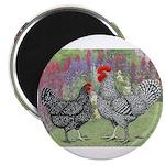 Marans Chickens 2.25