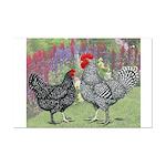 Marans Chickens Mini Poster Print