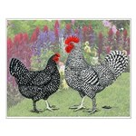 Marans Chickens Small Poster