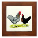 Black Sex-link Chickens Framed Tile