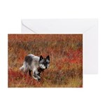 Alpha Male Wolf Greeting Cards (Pk of 10)