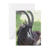 Sable Greeting Cards (Pk of 10)