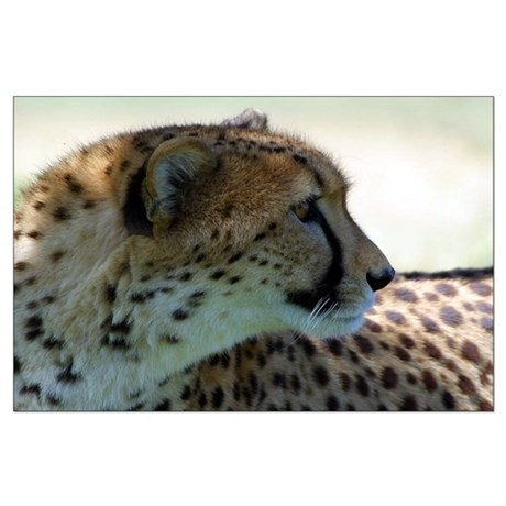 Cheeta Large Poster