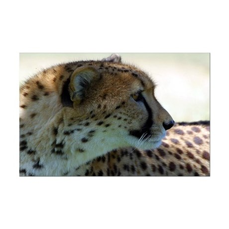Cheeta Mini Poster Print
