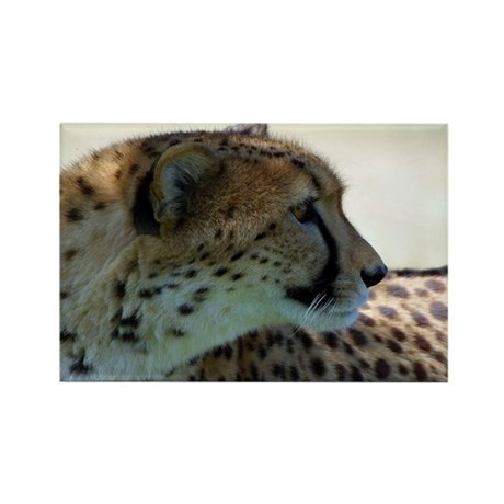 Cheeta Rectangle Magnet (10 pack)