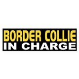 Border Collie In Charge Bumper Bumper Sticker
