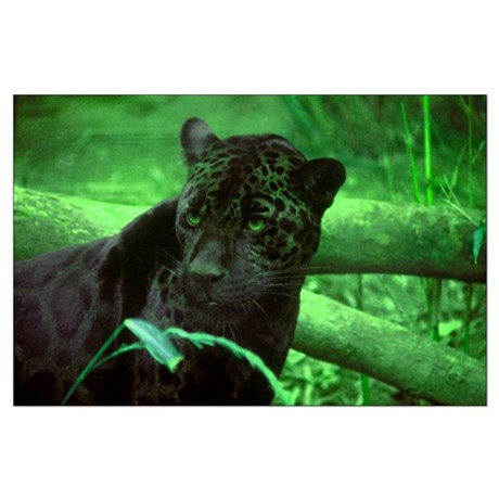 Black Jaguar Large Poster