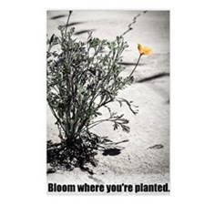 Funny Wildflowers Postcards (Package of 8)