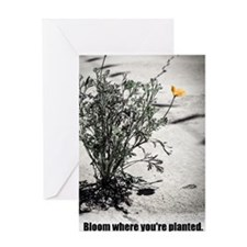 Bloom Where Youre Planted Greeting Cards