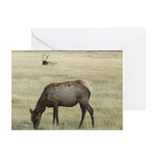 Lady Elk Greeting Cards (Pk of 10)