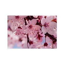cherry blossom Rectangle Magnet