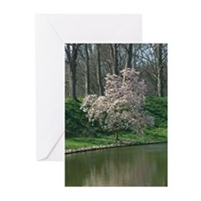 Magnolia Greeting Cards (Pk of 10)