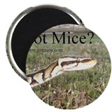 Cute Mice Magnet