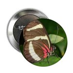 Butterfly pic Button