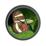 Butterfly pic Wall Clock