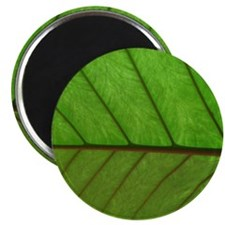 Green Leaf Magnet