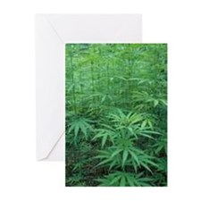 marijuanaplant2 Greeting Cards