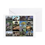 Coatimundi Greeting Cards (Pk of 10)