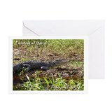Fisheating Creek -Alligator Greeting Cards