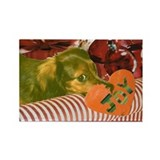Longhaired Dachshund Rectangle Magnet (10 pack)
