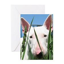 Cute English Bull Terrier Hiding in  Greeting Card
