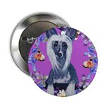 Chinese Crested 2.25