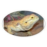Bearded Dragon Oval Decal