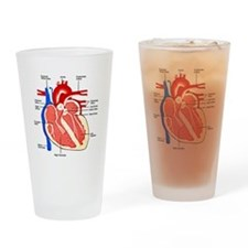 Heart Diagram Drinking Glass