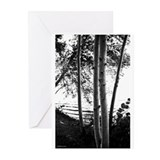 Trees Greeting Cards (Pk of 10)
