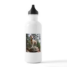 Red Heeler on Rock Water Bottle