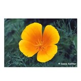 Poppy Postcards (Package of 8)