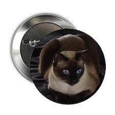 "Lulú, the Siamese Cat 2.25"" Button"
