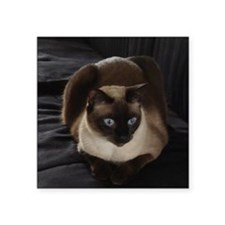 "Lulú, the Siamese Cat Square Sticker 3"" x 3"""