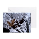 Icy Cocoon Greeting Cards (Pk of 10)