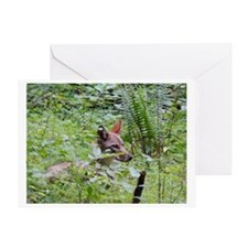 Hiding Coyote Greeting Card