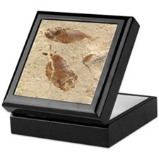 Fish Fossil Keepsake Box
