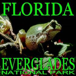 Florida Everglades National P T