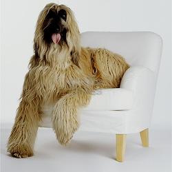 Afghan hound sitting Long Sleeve Maternity T-Shirt