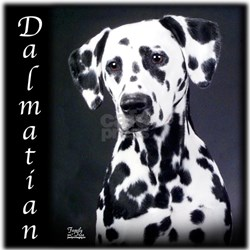 Dalmatian Tee