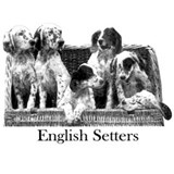 english setter pups sq cutout breed centered.png S