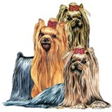 Yorkshire Terrier Yorkie Collage Mug