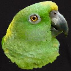 Rio the Amazon Parrot T-Shirt