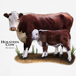 Hereford Cow and Calf Shirt