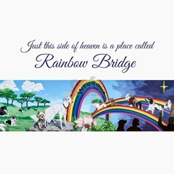 Rainbow Bridge Greeting Cards Card Ideas Sayings