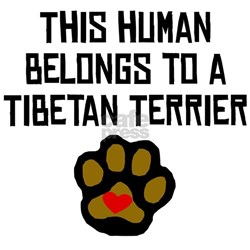 This Human Belongs To A Tibetan Terrier Infant T-S