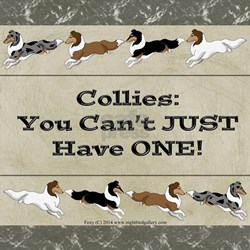Collie Chips T-Shirt