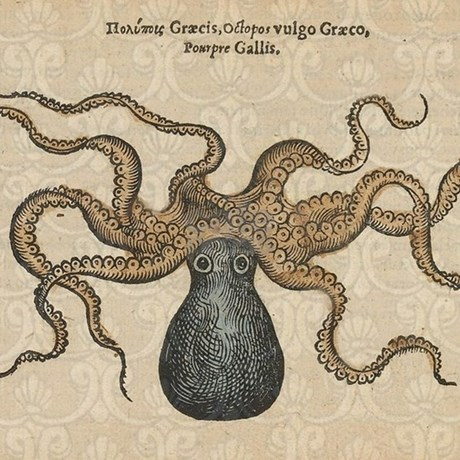 Vintage Kraken Illustration Vintage Kraken Illustration