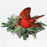 Bird cardinal Sweatshirts & Hoodies