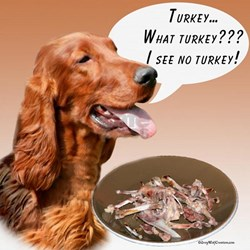 Irish Setter Turkey T